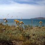 Берег Крыма вблизи Лисьей Бухты. Фото: Яндекс.Фотки / vladmar4
