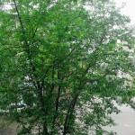 Весна у моего окна