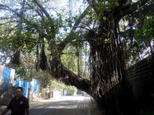 Индия, Пуна